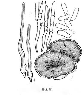 蔬菜简笔画步骤教学