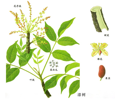 背景 壁纸 绿色 绿叶 设计 矢量 矢量图 树叶 素材 植物 桌面 371_322